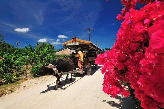Tour delle isole Kohama e Taketomi da