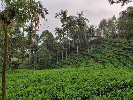 Stay in a tea garden