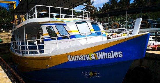 Kumara and Whales