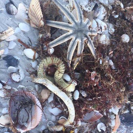 Foto de Sand Dollar Shelling