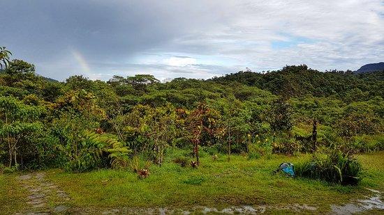 San Martin Region, Peru: Fundo Alto Nieva