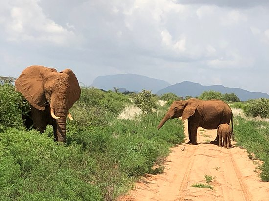 From Top of Mount Kenya to Safari