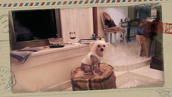 St. Petersburg, Russia: собака на посту