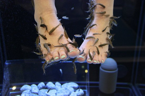 ‪Relaxed Feet Fish Spa‬