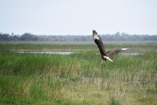 Geneva, FL: Hawk