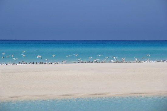 Socotra Adventure: Detwah lagoon, Socotra