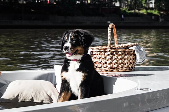 GoBoat Melbourne is dog friendly, so you can bring your pooch along for your picnic!