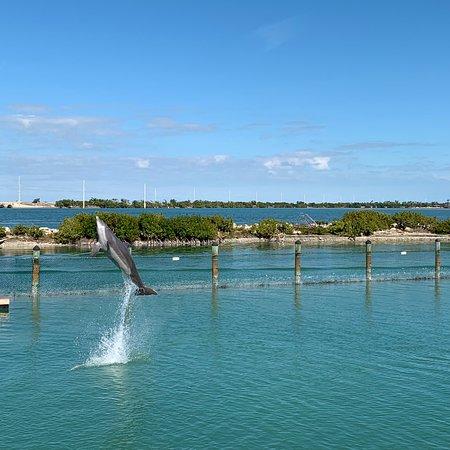 Swim w dolphins