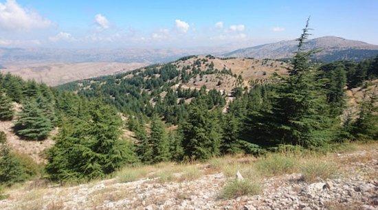 A2Z Lebanon