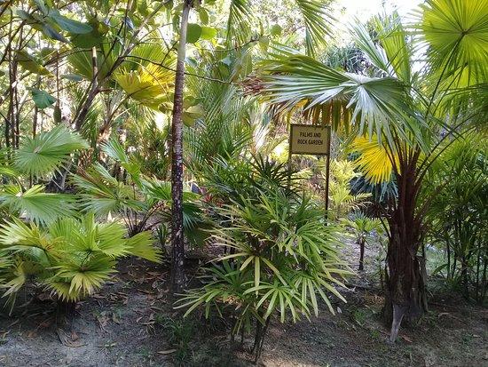 UBD Botanical Garden