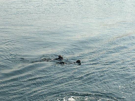 Monterey Bay: Sea otters