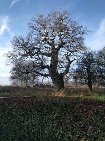 Hinton Ampner, UK: One of many beautifull trees.