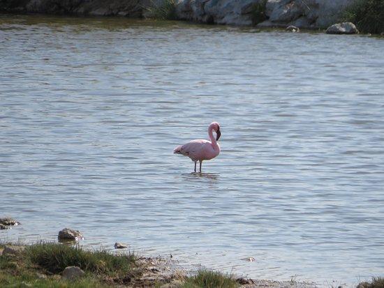 Makgadikgadi Salt Pan: Lesser flamingo not far from Sowa Pan