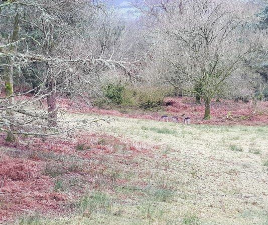 Gelli Aur country park - it's back open
