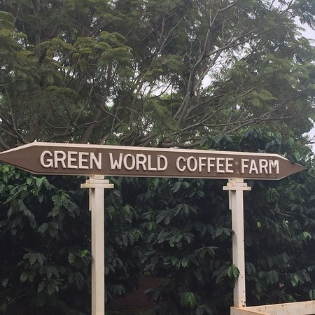 Green World Coffee Farms Wahiawa 2019 All You Need To Know