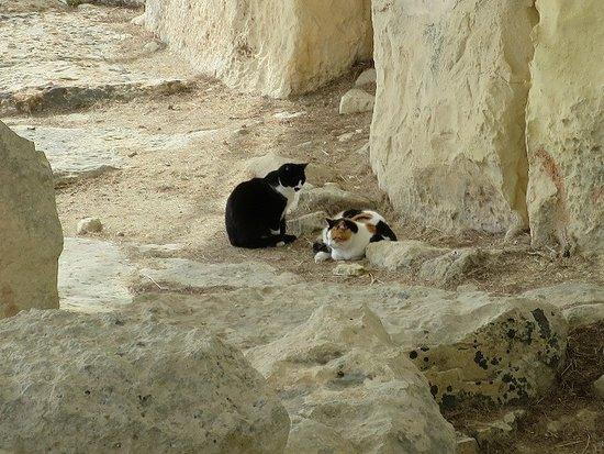 Tarxien, Μάλτα: 遺跡の中にも猫が・・