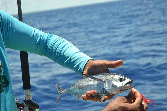 Tour privado de pesca en alta mar de...