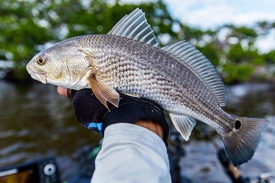 Pêche privée de 3/4 jours dans la...