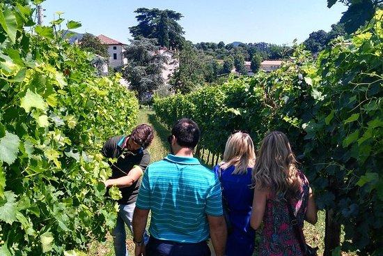 Tour des vins des collines euganéennes