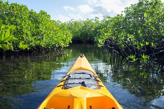 Mangrove Forest Bali Canoe Eco Tour