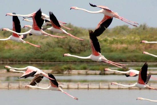 Naturas Reserva Castro Marim - Tour...