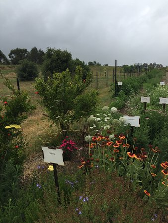 Birregurra, Australia: Wandering through the gardens