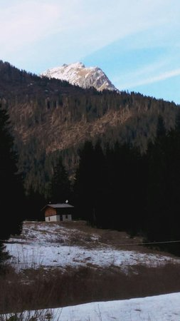 San Pietro di Cadore, Ιταλία: La Val Visdende com'è oggi. La zona in luce, non è un raggio di sole, ma lo spazio vuoto lasciato dagli alberi caduti.