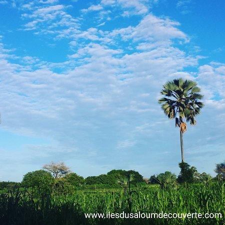 La satisfaction du client est notre priorité numéro 1  Iles du  saloum  découverte  Sénégal  ndangane  campement
