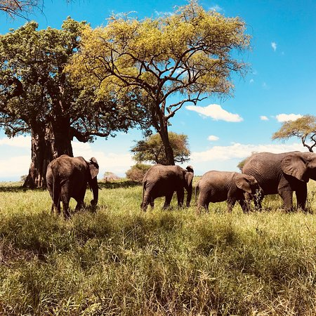 SD(Social Development)Safaris Limited