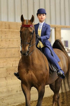 Mokena, IL: English and Western Riding Lessons