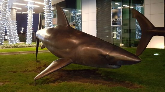 Traja bronzovi zraloci