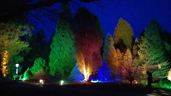 Bedgebury National Pinetum and Forest: Christmas @ Bedgebury
