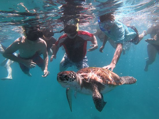 Breezing Watersports Barbados Snorkeling Tours: Diving with the turtles