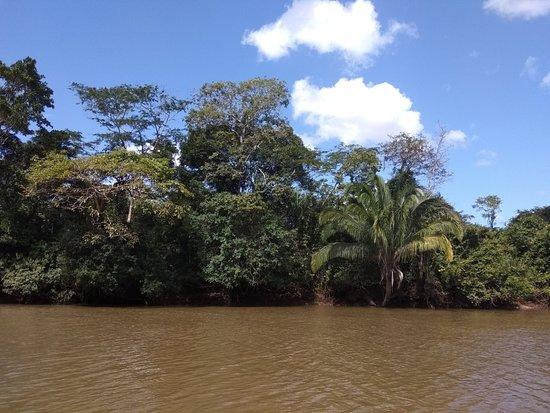 Bilde fra Cano Negro