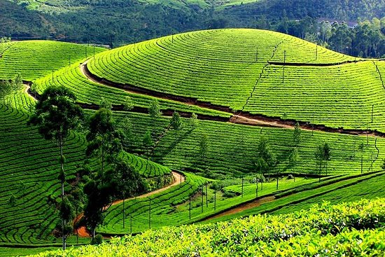 Private Day Trip to Munnar from Kochi...