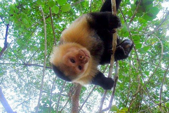 Excursión por la Isla de los Monos...