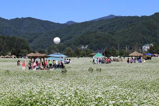 Festival culturel de Hyoseok avec la...