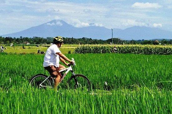 Tour in bicicletta elettrica nel