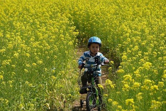 Randonnée à vélo d'une journée à...