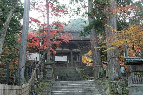 Chitoshi Meotosugi