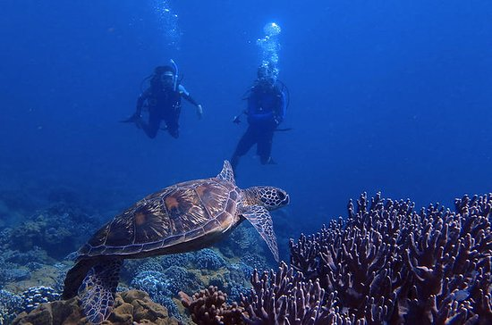 Plongée sur la plage au Dog Leg Reef...