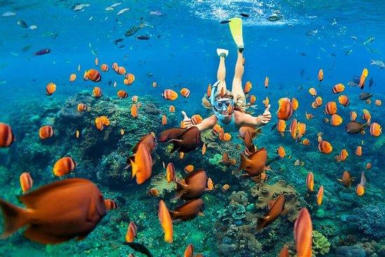 Snorkel e nadar com as tartarugas...