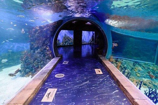 Crocus City Oceanarium Admission...