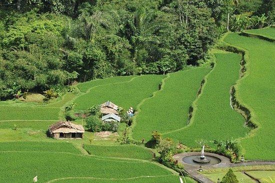 North Bali Tour - Visiting Rice Terrace, Lake, Waterfall, Temple and Hot Spring: North Bali Tour