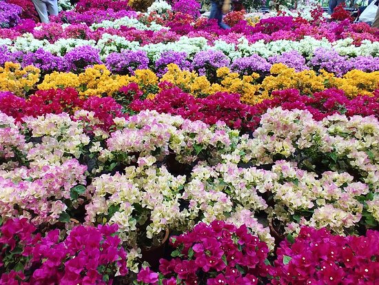 Jianguo Holiday Flower and Jade Market