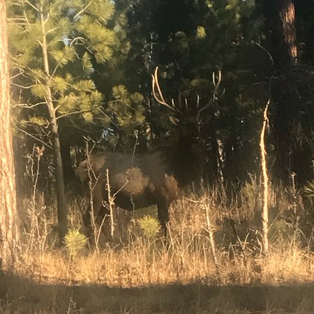Cloudcroft, NM: Beautiful area to see Elk!