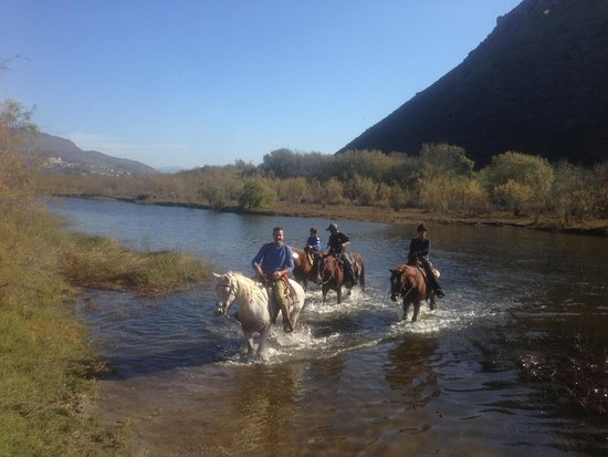La Mision, Mexico: Swimming Horses !!!