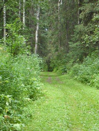 Straight path through woods