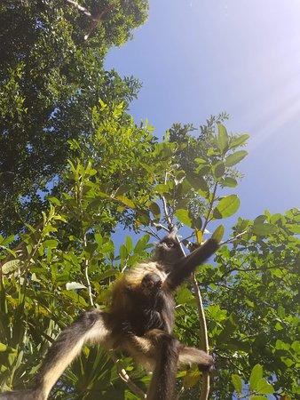 Baby & Momma Monkey!