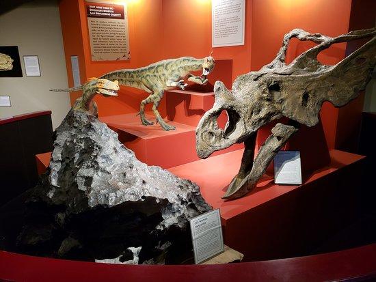 San Bernardino County Museum照片